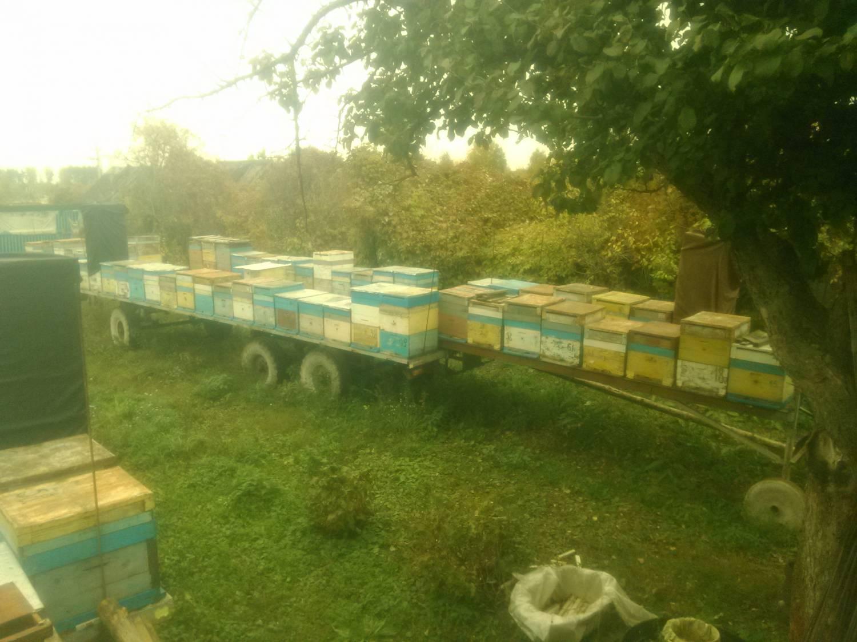 Как правильно сделать отводок пчел без матки