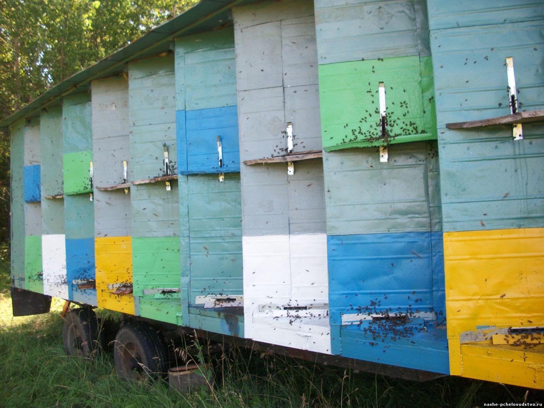 Павильон для пчел с своим руках