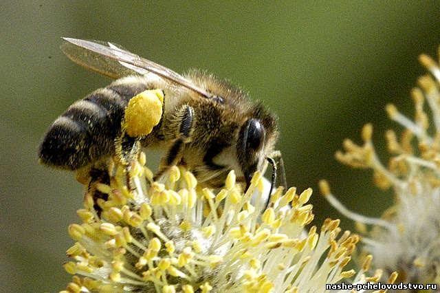 Доска объявлений челябинск пчелы работа киров свежие вакансии центр занятости сиделка