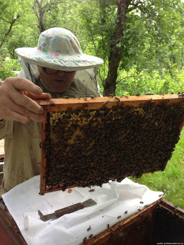 Как сделать отводок пчел Пасека. Пчелы. Мёд 45