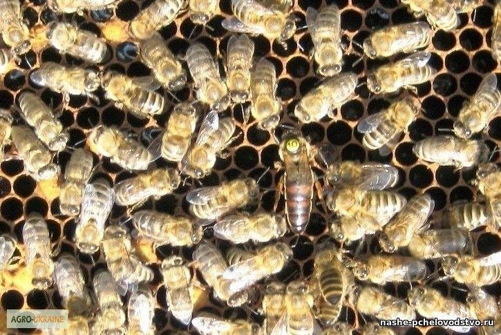 Доска объявлений пчёл газета алейска доска объявлений