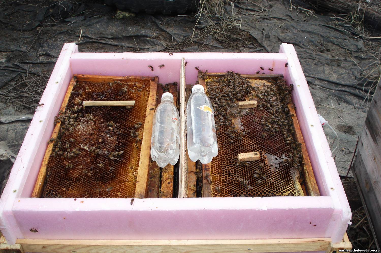 Как приманить пчел: цветы медоносы в саду 46
